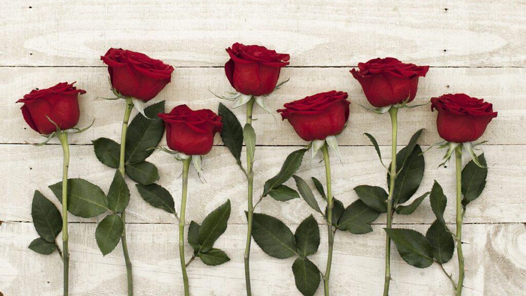 Güllerin anlamı
